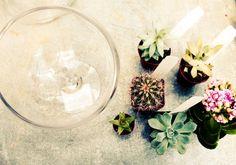 Terrariums: The Perfect Condo Plants