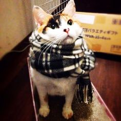 i iz nice warm   __ What is FREECABA? (See My Profile <@jurale13> for an Answer).