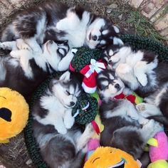 The pack, all snuggled up with their toys.