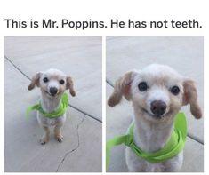 Die 13 besten Bilder von lustige Hundefotos | Lustige ...