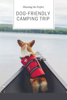 The Dapple: Dog Life Style Dog Friendly Camping in Maine - dog training collars - # Cute Little Animals, Cute Funny Animals, Funny Dogs, Baby Animals Pictures, Cute Animal Pictures, Dog Training Books, Training Classes, Training Videos, Training Tips