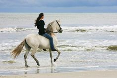 Gallop bareback along a beach Bareback Riding, Horse Riding, Pretty Horses, Beautiful Horses, Animals And Pets, Cute Animals, Beach Rides, Horse Quotes, Equine Quotes