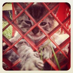 Let me out!! Photo by rhat