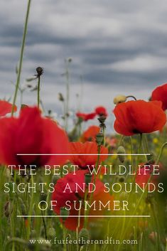 The Best Wildlife Sights and Sounds of Summer Sight & Sound, Bird Watching, Stargazing, Wildlife, The Incredibles, Good Things, Nature, Summer, Naturaleza