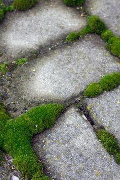 Eliminer les mousses vertes