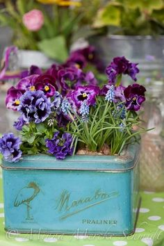 Sweet Spring Flowers, use old tins with the tops cut out as containers for spring plants!  I always wonder what I can do with all the tins I have! :)
