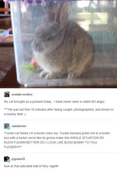 This rabbit is so pissed! Haha so funny lol Funny Animal Memes, Cute Funny Animals, Funny Cute, Really Funny, Funny Memes, Funny Humour, 9gag Funny, Funny Captions, Memes Humor