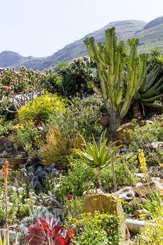 fynbos rocks: a gallery tour of artist nola muller's indigenous cape garden – House and Leisure Beach Gardens, White Gardens, Terrace Garden, Garden Grass, Hornbeam Hedge, African Plants, African House, Outfits Mujer, Water Wise