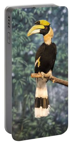 Great Hornbill Portable Battery Charger featuring the photograph Great Hornbill by Becca Buecher