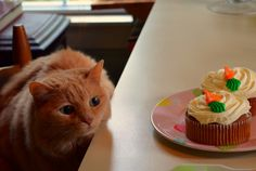 Lucy loves cake by lostvestige, via Flickr
