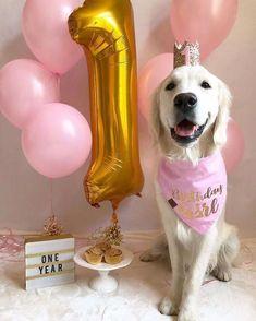 Dog And Puppies Art Birthday happy dog golden retrievers 31 ideas - And Puppies Art Birthday happy dog golden retrievers 31 ideas - Dog First Birthday, Puppy Birthday Parties, First Birthday Pictures, Puppy Party, Animal Birthday, Dog Parties, Party For Dogs, Birthday Ideas, Golden Retrievers
