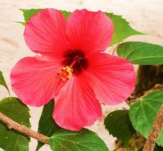 Aruba/visit ocjohn.com