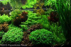 2015 AGA Aquascaping Contest - Entry #595