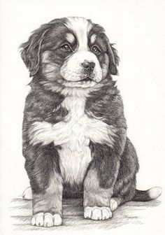 Illustratie Berner Sennen pup / Bernese mountain dog, tekening van hond in grafiet potlood door Dyenne Nouwen