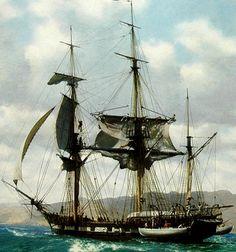 In het jaar 1831 ging Charles Darwin mee met de boot The Beagle om de natuur en planten te bestuderen, onderweg schreef Charles Darwin daar allerlei nauwkeurige verhalen over. Onderweg was Charles ook erg ziek. De reis duurde 5 jaar (1831-1836)