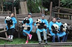 BSB with pandas.. too cute!