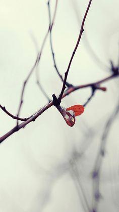 Nature winter Samsung Galaxy S3 wallpaper