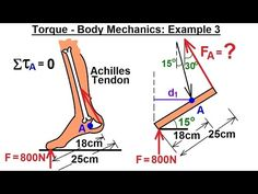 Physics - Mechanics: Ch 15 Torque (15 of 27) Body Mechanics: Ex. 3, F=? on Achilles Tendon*** - YouTube