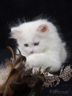 White Kittens, Cute Cats And Kittens, Kittens Cutest, Angry Cat Memes, Cat Traps, Cute Cat Illustration, Funny Cat Compilation, Cat Aesthetic, Bad Cats