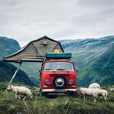 Let's Go Camping! - Outdoor Camping Tips Volkswagen Bus, Vw T1 Camper, Vw Caravan, Travel Camper, Wolkswagen Van, Van Vw, Vw Bus Camping, Camping Life, Camping Friends