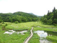 夏の暑い日は湿原でのんびりいかがですかコオニユリと桔梗が咲いてましたたきがしら湿原新潟県