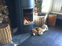Dog tired! A beagle enjoying the warmth from a Stuv at The Cornish Arms.   #cornish #arms #dog #tired #lazy #fire #stove #stuv #hearth #slate #stone #wood #logs #burner #open #baskets #fireplace #beagle #breed #cornwall