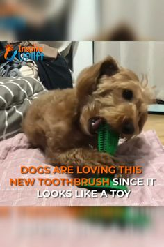 Dog Toothbrush Toy 😍 The Dog Toothbrush Toy encourages pets to clean their teeth every day. It is specially designed to clean teeth on both sides and is angled to fit comfortably in your dog's mouth. Dog Toothpaste, Dog Training Tips, Training Classes, Training Pads, Crate Training, Training Videos, Training Online, Training Quotes, Agility Training