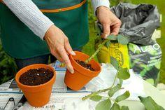 in Topf einsetzen Planter Pots, Herbs, Versuch, Bad, Flower Power, Cottage, Gardening, Tips, Ideas