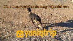 Asociación para galgos y yuniqtrip