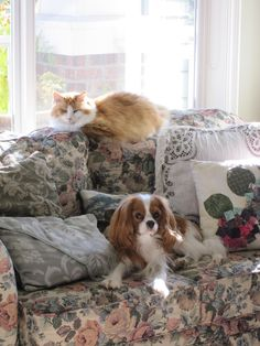 my dog Winston & my cat Scamp. King Charles Puppy, Cavalier King Charles Dog, King Charles Spaniel, Dog Love, Puppy Love, Cute Puppies, Dogs And Puppies, Cat Pillow, Puppy Mills