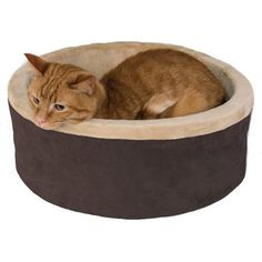 The K&H Thermo-Kitty Bed has a dual thermostat 4 Watt heating unit buried deep within its thick, super soft, orthopedic foam base. It warms the surface degrees above ambient air temperature to your cat's normal body temperature when in use. Pet Beds, Dog Bed, Heated Cat Bed, Bed Images, Cat Supplies, Dog Bowls, Cuddling, Your Pet, Pets