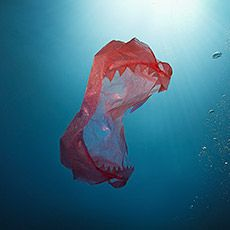 Take the pledge to prevent single use bags from polluting the environment