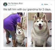 grandma is fattening him up for thanksgiving Memes Estúpidos, Dog Memes, Stupid Funny Memes, Funny Relatable Memes, Haha Funny, Funny Posts, Funny Cute, Hilarious, Funnt Memes