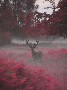 The beauty of nature. See more ideas about Nature, Birds and Beautiful places. Photo Animaliere, Photo D Art, Nature Animals, Animals And Pets, Cute Animals, Wild Animals, Beautiful Creatures, Animals Beautiful, Animals Amazing