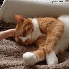 Cute ginger cat trying to sleep