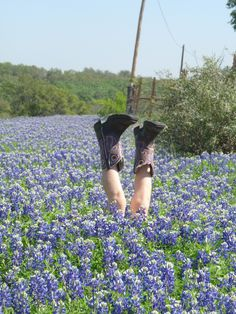 Bluebonnets in the Texas Hill Country!