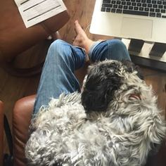 This lovable lap dog who's here to help. | 19 Magnificent Mutts You'll Wish Were Yours