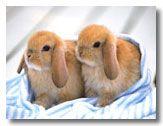 Little Baby Rabbits