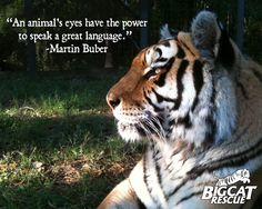 """""""An animal's eyes have the power to speak a great language.""""  -Martin Buber"""