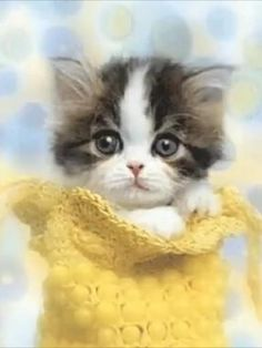 Cute Kitten Gif, Kittens Cutest, Hawaii Vacation, Dream Vacations, Good Morning Images Hd, Kitten Images, Kindness Matters, Christian Art, Wordpress Theme