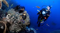 Great Barrier Reef Offers Scuba Divers Chance To See Beautiful Diversity Of Ocean Death Great Barrier Reef Diving, Layers Of The Ocean, Ocean Acidification, Underwater World, Ocean Life, Heritage Site, Marine Life, Dream Vacations, Motivation