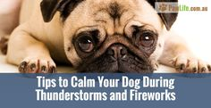 Australia has scary storms during summer, dogs in particular get scared easily. Here are 10 tips to calm your dog during thunderstorms and fireworks.