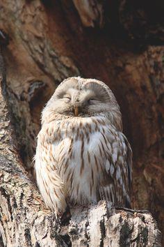 Owl enjoying the sunshine Owl Tumblr, Animals And Pets, Cute Animals, Animal Fun, Reptiles, Owl Species, Owl Mug, Owl Pictures, Beautiful Owl