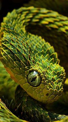 Serpiente con amarillo verde escamosa.