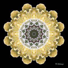 Mandala ''gelbe Blätter'' von KreativesbyPetra    Mandala auf Leinwand gespannt 20cm x 20cm, mit schwarzen Seitenrand 2cm breit   #kreativesbypetra #Mandala #mandalaart #Natur #nature #fotografie #photography #naturfotografie #naturephotography #makro #macro #makrofotografie #macrophotography #Spiegelung #Spiegelungen #abstrakt #Abstract #Reflexion #adobephotoshop #photoshop #canon #farben #colours #Leinwand #blüte #blossom #gelb #yellow #leaf #blätter Mandala Art, Canon, Photoshop, Brooch, Jewelry, Mandalas, Macro Photography, Nature Photography, Mosaics