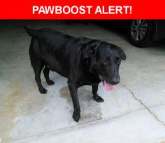 Is this your lost pet? Found in Simpsonville, SC 29680. Please spread the word so we can find the owner!  Black Lab, overweight  Near Picton Place and Chetfield Court