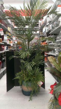 Large Summer plants.. Robin Evans