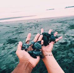 baby turtles by the ocean. Cute Creatures, Beautiful Creatures, Cute Baby Animals, Animals And Pets, Wild Animals, Baby Turtles, Tier Fotos, Adventure Is Out There, Marine Life