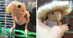 Everyone Falls in Love With This Featherless Lovebird, Send Mini Sweaters To Save Her From Freezing | Bored Panda