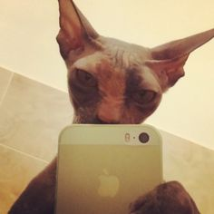Cute cat pictures (Selfie Top 5)